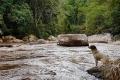 lumiar_dog_and_river
