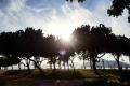 trees_rio_morning